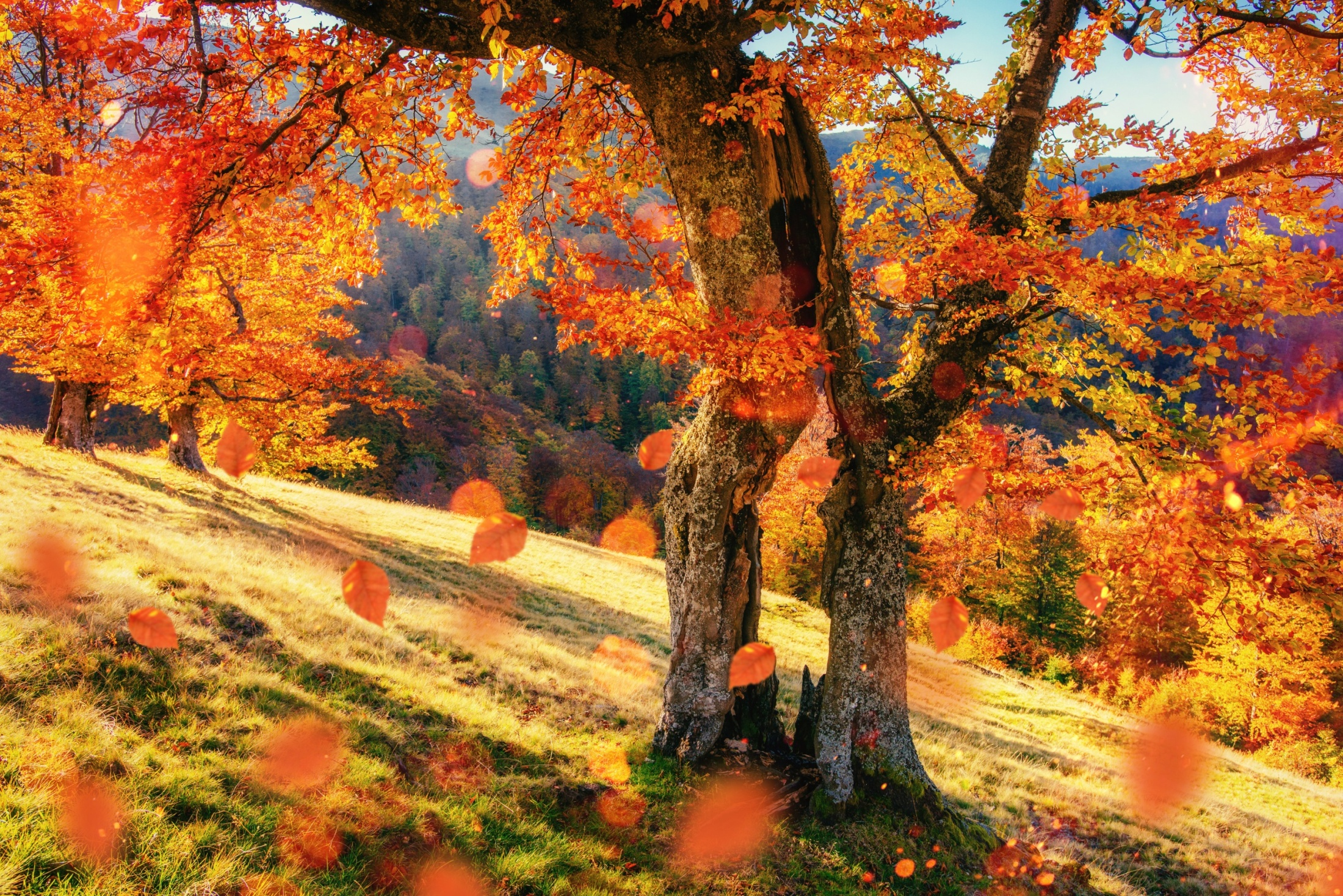 7 Wonderful Autumn Landscapes 7 Csod 225 Latos őszi T 225 J