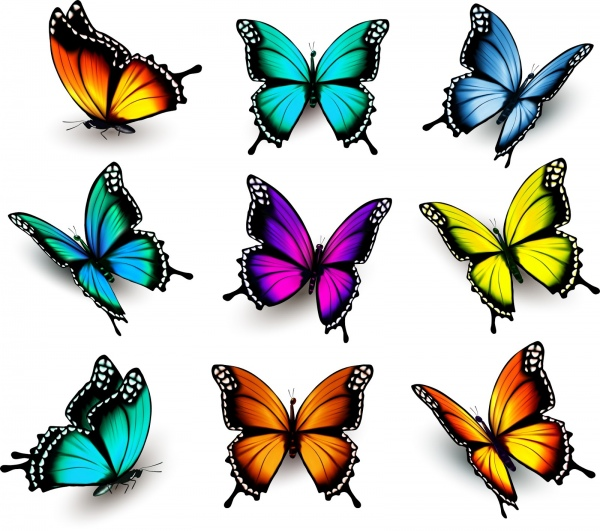 Thumb Butterflies Cartoons Pillangok Clipart Bugs Cute